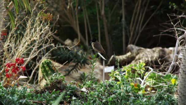 Pták sedí na zahradě zastřelil v Izraeli