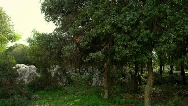Panorama z větrného lesa Karmel v Izraeli