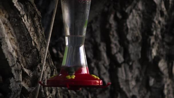 Kolibřík pití z ptačí krmítko vícekrát
