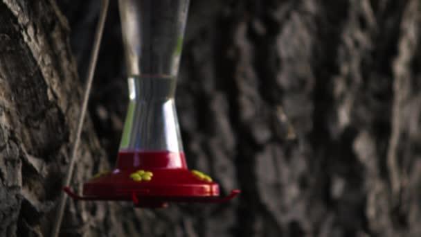 Kolibřík létající do ptačí krmítko