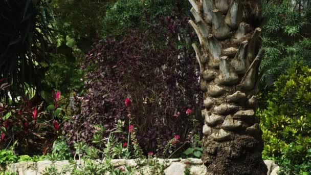 vegetace v The kibucu Ejn Gedi v Izraeli