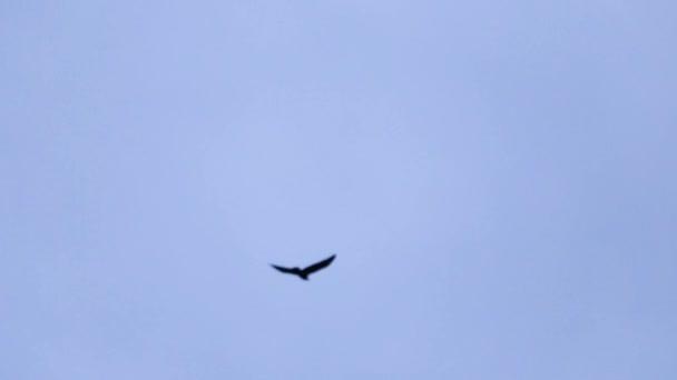 Oiseau qui vole sur un ciel bleu pr s de vieille glise d 39 une belle architecture vid o - Jeux d oiseau qui vole ...