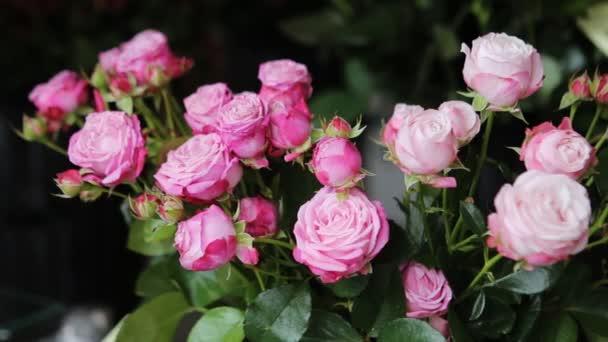 Beautiful fresh pink roses.