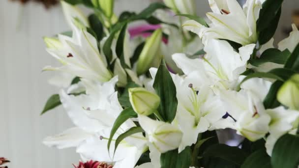 Bílá lilie květiny pozadí