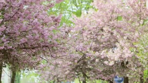 Detailní záběr krásný strom plný fialové květy.