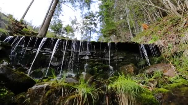 Zblízka malým vodopádem a zelených rostlin v přírodě