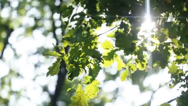 Summer nature. Beautiful green leaves and bright sun