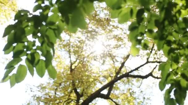 Čerstvé mladé zelené listy v jasném slunečním světle, detail