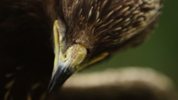 Ritratto di epica macro close-up di un predatore uccelli lampeggiare gli occhi e ha aperto il becco
