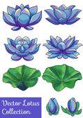 Fotografie Lotus flower sada