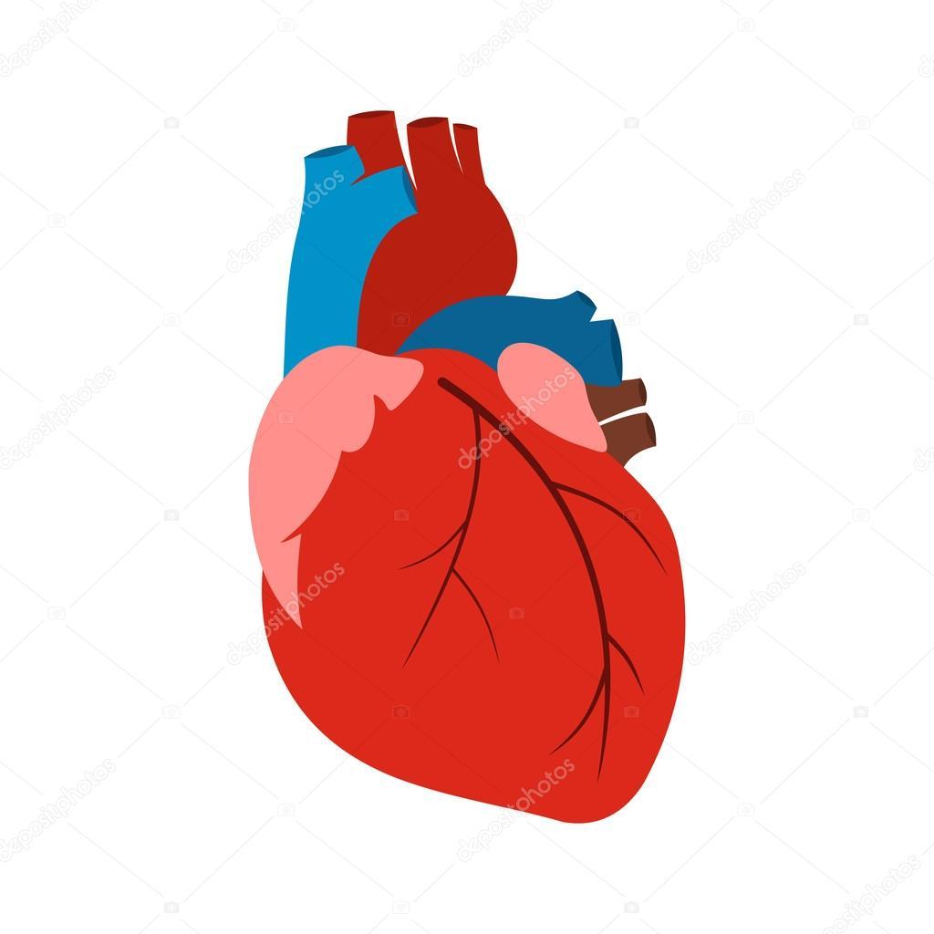 Human heart icon — Stock Vector © juliarstudio #101310830