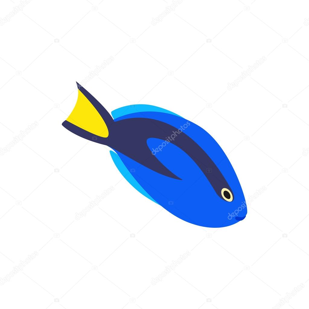 Surgeon fish icon, isometric 3d style