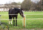 Lidé při pohledu na krásné černé koně v letní den