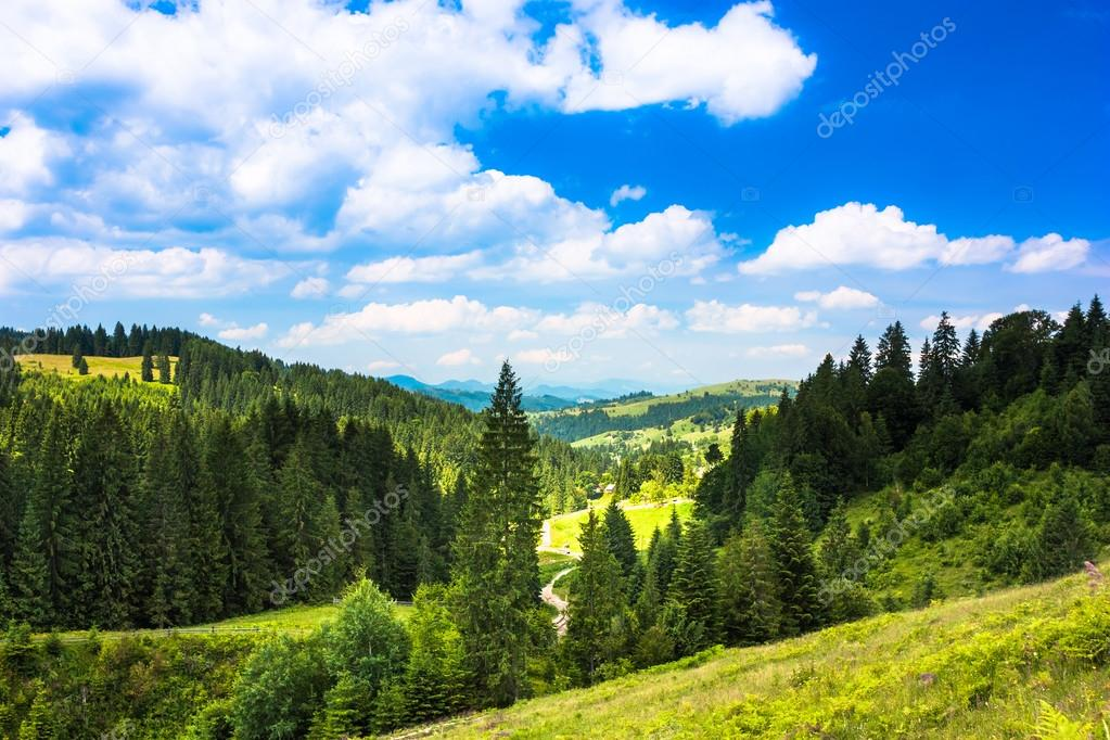 Sunny mountain landscape. Green grass, trees and blue sky