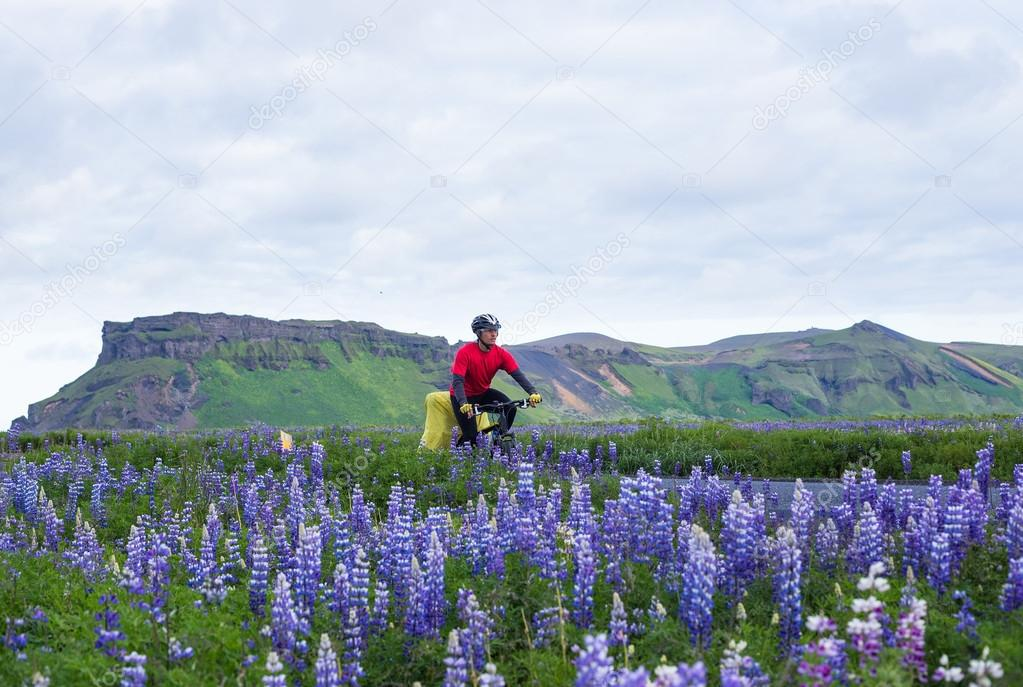 Biker with lupine during icelandic trip at summer time