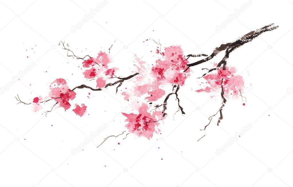 Branche De Cerisier branche de cerisier sakura de printemps — photographie shavrinavera