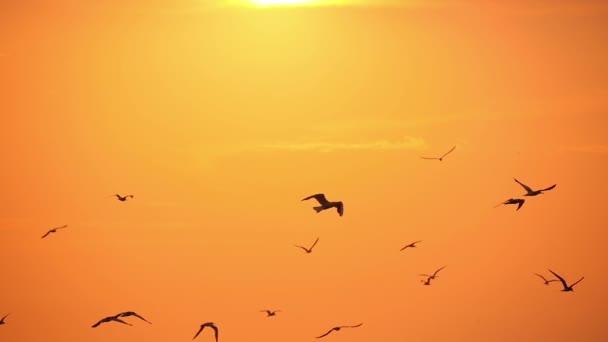 az égen a naplemente 2 sirályok