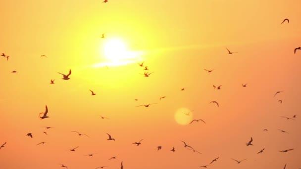 az égen a sunset sirályok