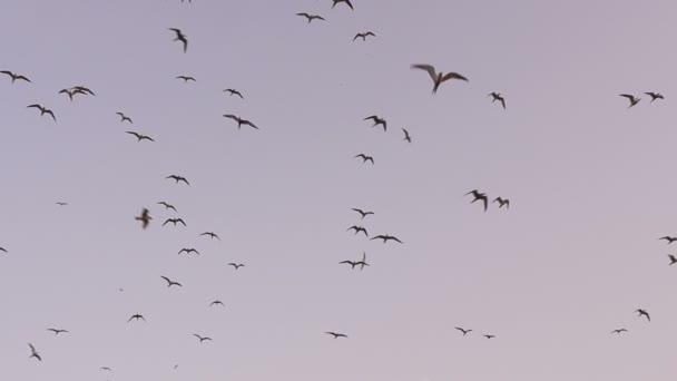 ptáků letící po obloze