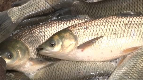 ryby do sítí rybářů
