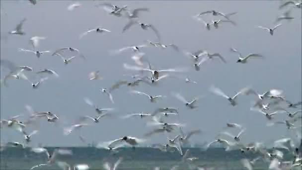 Ptáci létají nad hnízda