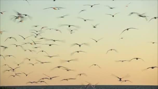 Ptáků, kteří létali proti barevný západ slunce