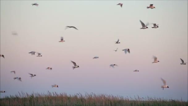 Repülő szemben a színes sunset madarak