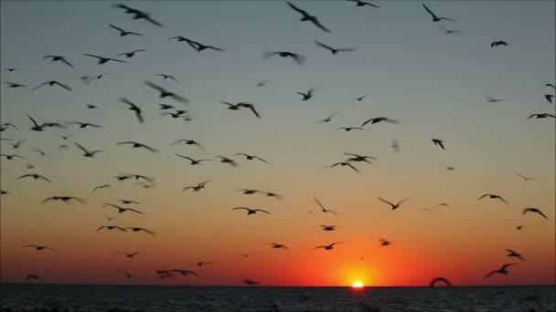 ptáků, kteří létali na pozadí s západ slunce