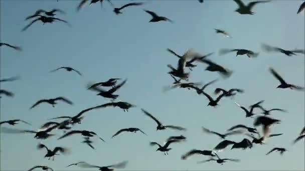 racků létání obloze