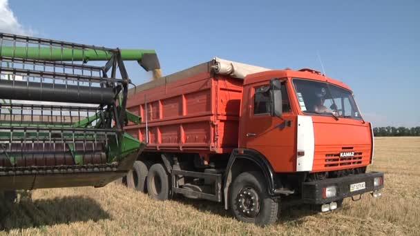 Sklízeč sbírá pšenice