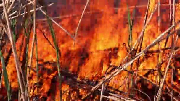 popel po požáru
