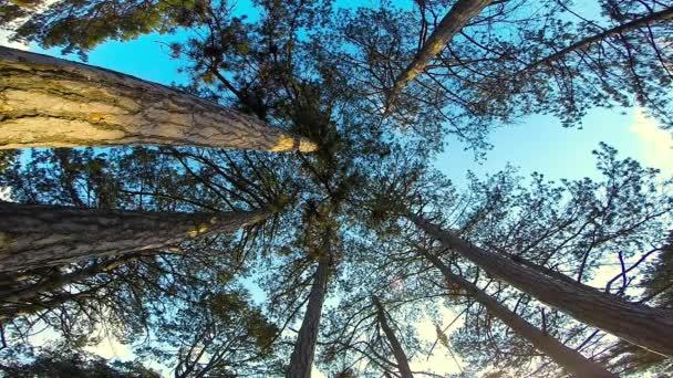 zöld fák az erdőben