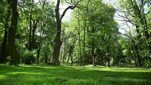 Lidé v zeleném parku