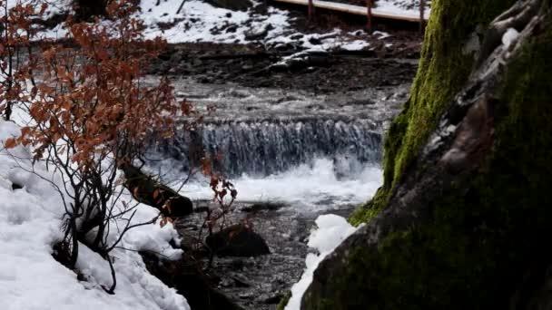Horské řeky vodopád v lese na jaře