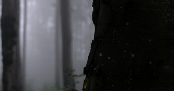 Dolly Shot of a Dark Foggy Forest With Birds Singing