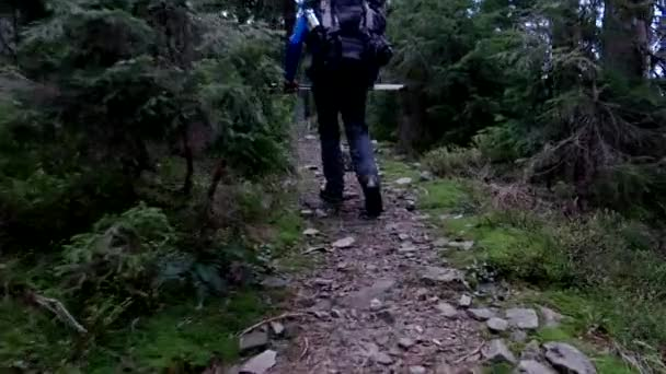 Hiking on a Trail in Forested Mountains (Pov) Steadicam Shot