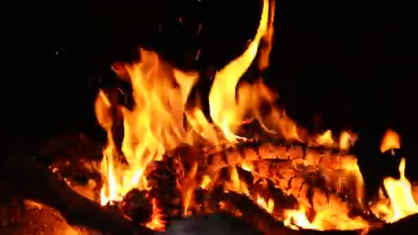 Campfire Camp Fire Summer Burning Pine Cones Stock Video