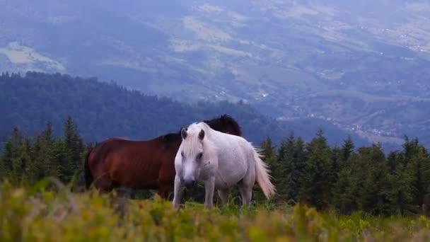 Állomány a vadlovak a hegyoldalban