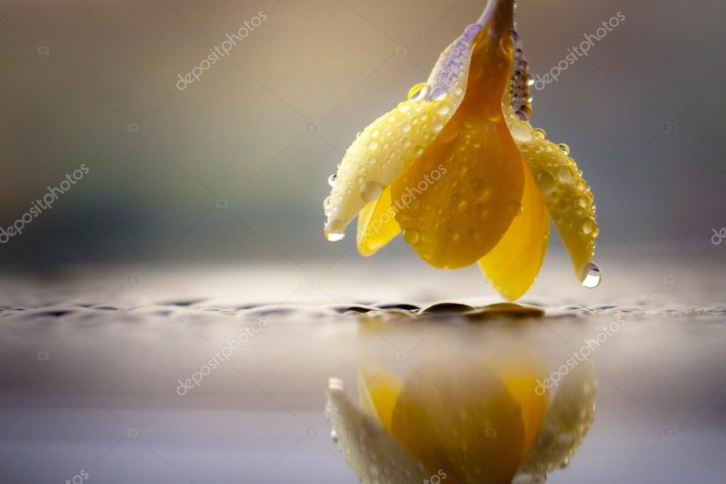 Yellow flower reflection