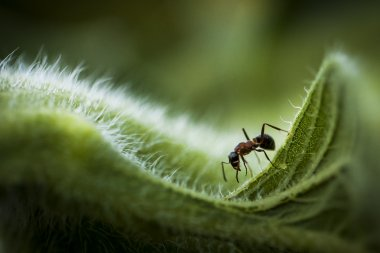 Ant on leaf