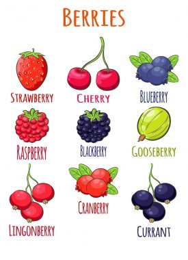Berries. Cranberry, blueberry, gooseberry, currant, blackberry, lingonberry, currant, raspberry, cherry, strawberry