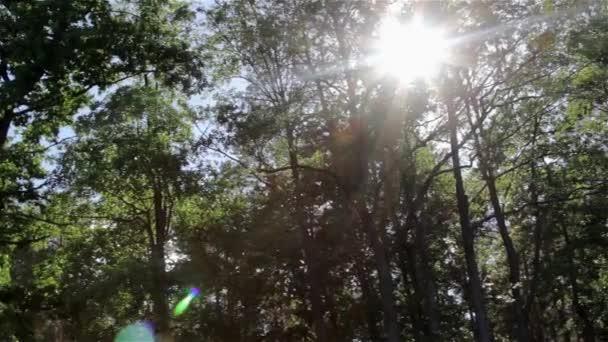 Slunce přes stromy v lese