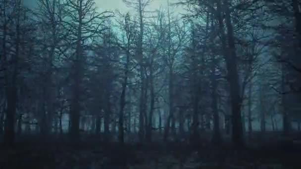 Smyčka animace létání přes strašidelný les