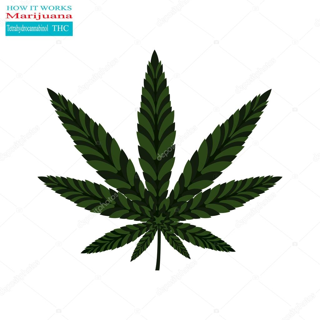 Marijuana how it works 1
