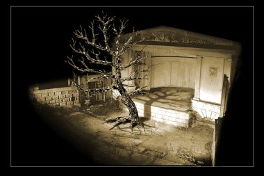 Theater symbol. Photo montage 3d. The withered fantastic tree is on the stage.