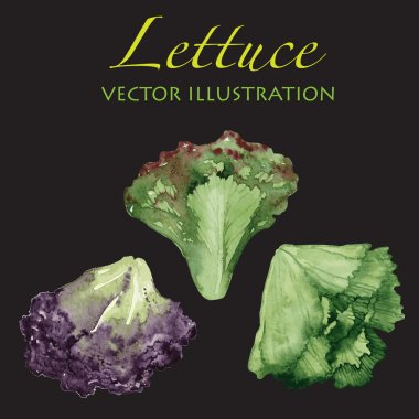 Watercolor lettuce leaves isolated on dark background.