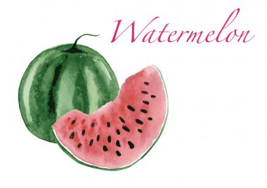Watermelon isolated on white background watercolor vector illustration.