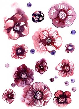 Watercolor anemons isolated flowers vector illustration