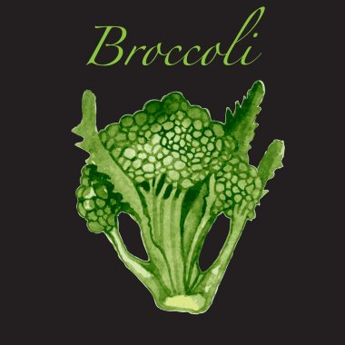 Watercolor broccoli vector illustartion.