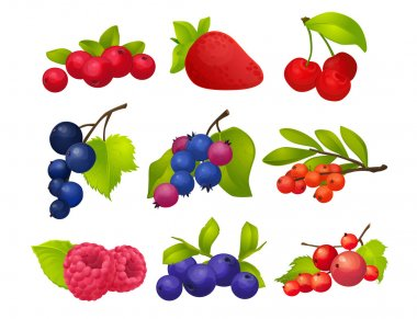 Berries, set, big set, with no background, strawberry, raspberry, cherry, currant, mountain ash, blueberries, cranberries,